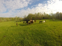 Kentucky Beef